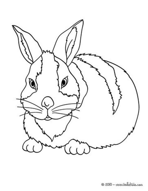 big bunny coloring pages big rabbit coloring pages hellokids com