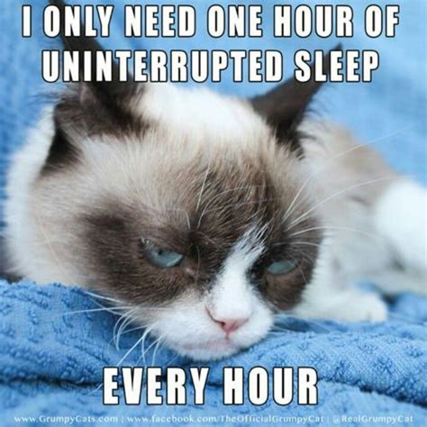 Grumpy Cat Sleep Meme - 65 best memes for narcolepsy sleep images on pinterest