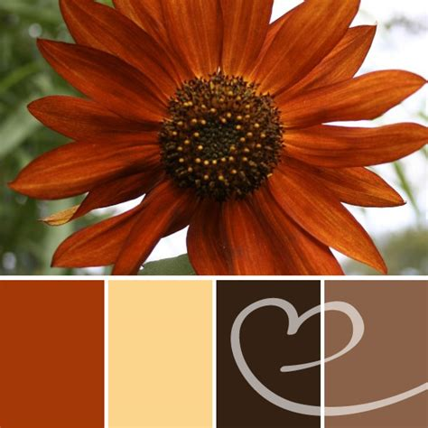 beautiful burnt orange color palette used in a labor day weekend wedding colors for