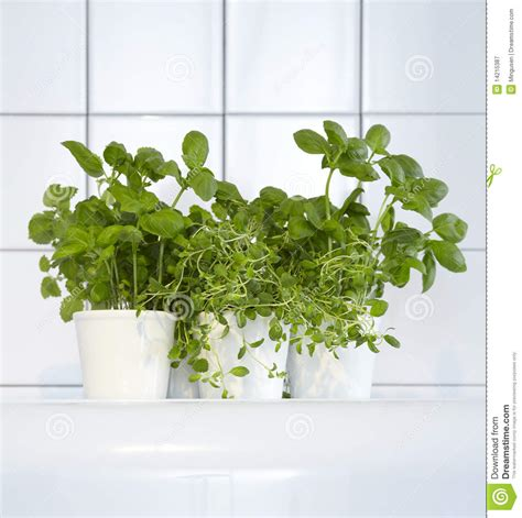 how to grow fresh herbs in your kitchen fresh herbs in kitchen stock image image of basil seasoning 14215387