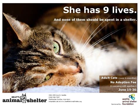 adopt a seattle the scoop 187 june is adopt a cat month help the seattle animal shelter celebrate it