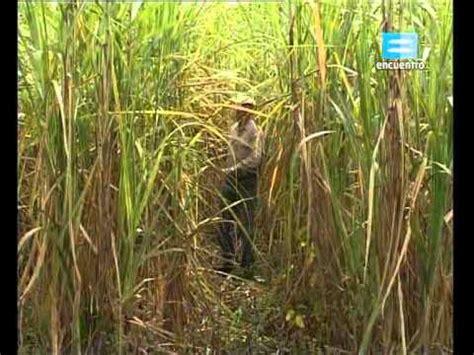 cadena productiva arroz cadena productiva del arroz doovi