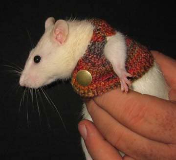 knit rat sweater pattern animal hunters our tribute to the ugly christmas sweater