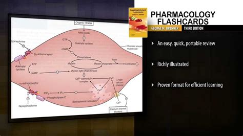 pharmacology flash cards 4e books pharmacology flash cards 3rd edition
