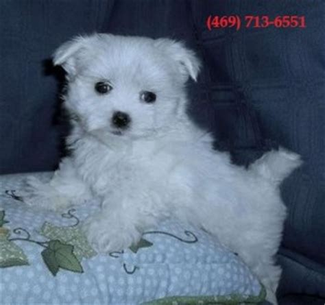 free puppies in richmond va dogs richmond va free classified ads