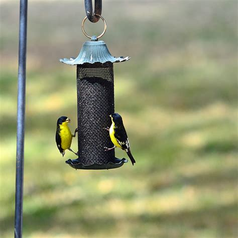 how to choose the best bird feeder