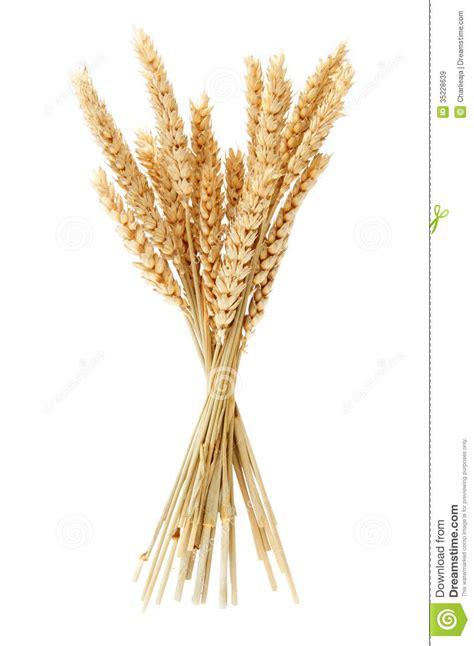wheat clip stalk wheat clipart clipground