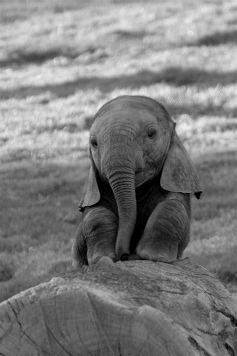 wallpaper elephant cute cute baby elephants car interior design