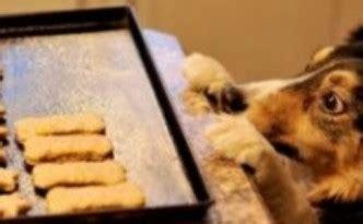shoo per cani fatto in casa biscotti e crocchette fatti in casa tiziana cremesini