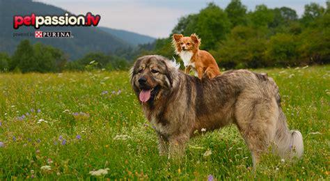 alimentazione cani piccola taglia l alimentazione ideale secondo la taglia petpassion