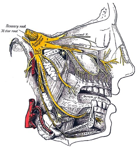 sensazione di bruciore alla testa nevralgia trigemino sintomi cause e cura farmaco e