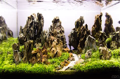 aquascapes com mot s aquascapes added aga 2015 aquascapes uk aquatic plant society