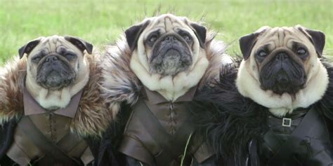 pug of thrones of thrones pugs slaughter us with cuteness