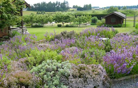 herbal garden herb garden lopez island kitchen gardens