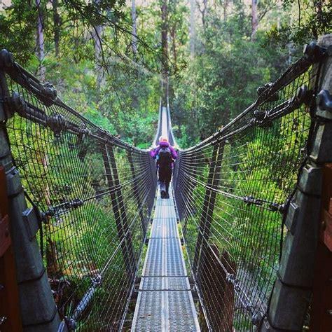 tree swings australia best 20 into the forest ideas on pinterest