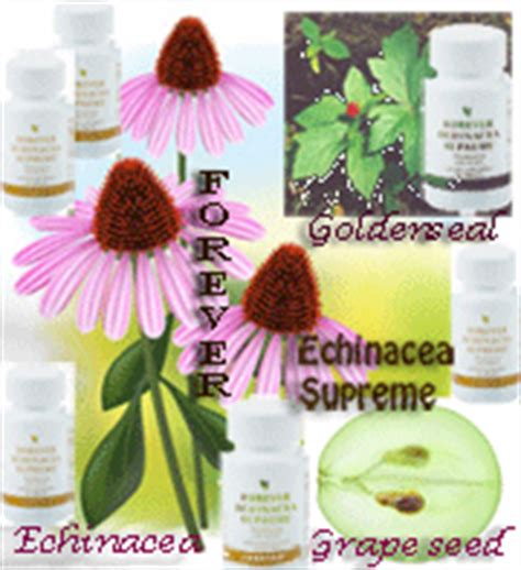 forever echinacea supreme echinacea supreme archives forever living distributor