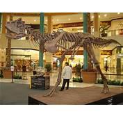 Carnotaurus  Toda La Informaci&243n De Este Dinosaurio Carn&237voro