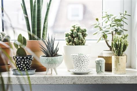 Plants For Decorating Home by Gorgeous Ways To Decorate Your Home With Plants