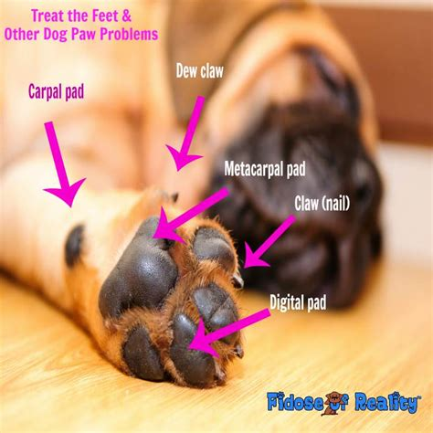puppy toes treat the and other paw problems fidose of reality