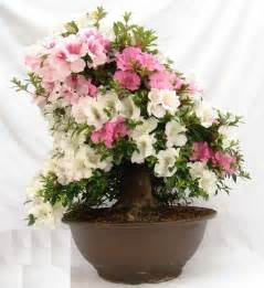 Indoor Plants That Don T Need Sun fresh indoor flowering plants winter in uk 21123