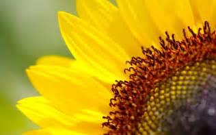 Sunflower Wedding Ideas S Is For Sunflower Flower Blog