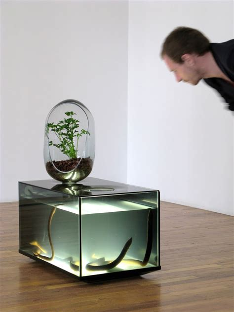 indoor eco system  freshwater fish vegetable patch