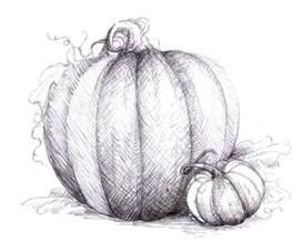 magellin blog pumpkin drawing