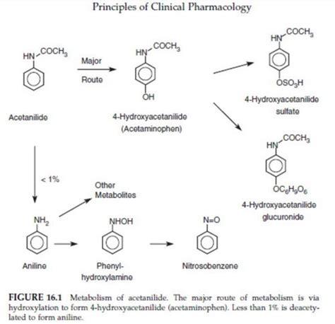 Brotowali Bubuk 1 Kg biochemical mechanisms of toxicity lansida