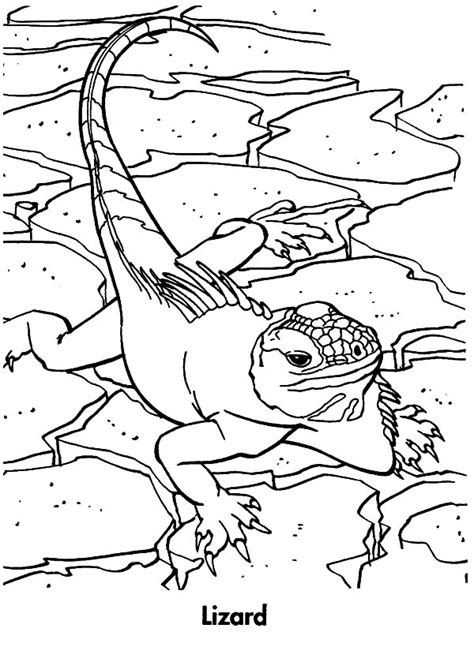big lizard coloring page lizards coloring pages lizard coloring pages giant