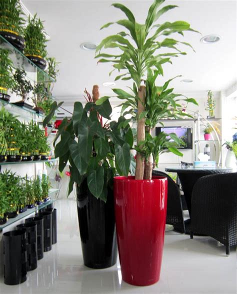 indoor plants  planters dubai pots containers