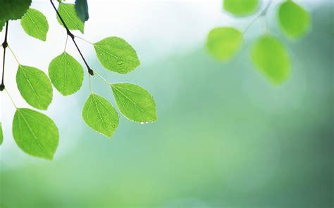imagenes de hojas otoñales 신선한 녹색 잎의 벽지 2 3 1920x1200 배경 화면 다운로드 신선한 녹색 잎의 벽지