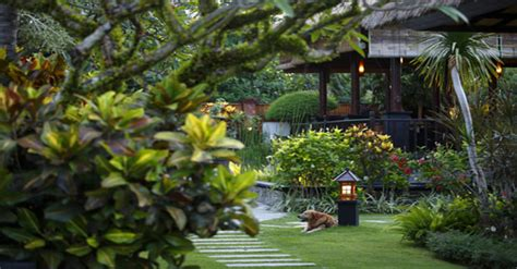 Bali United Birdies ap garden services connecticut town finds healing