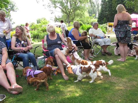 doodle club nederland about cavaliers the companion cavalier king charles