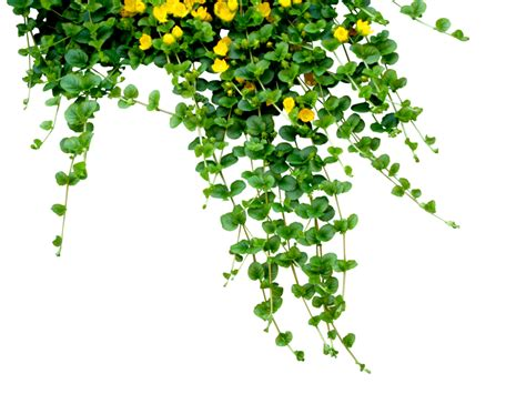 green leaves png image veerendra vijaya pinterest ivy by black b o x on deviantart png plants pinterest