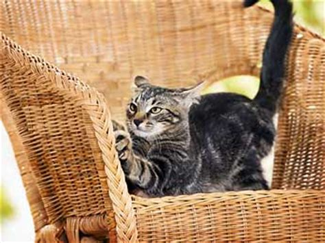 cat scratching couch solution 6 annoying cat behaviors and how to stop them