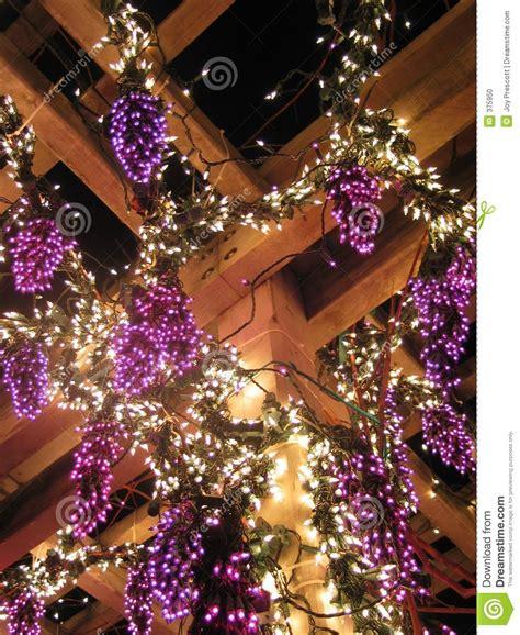 grapevine lighting of the christmas tree grape vine lights stock photo image of white fruit