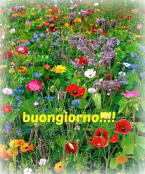 il colore dei fiori un bel buongiorno col colore dei fiori il buongiorno quot a