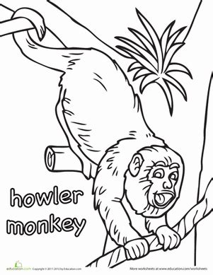 monkey coloring pages printables education com