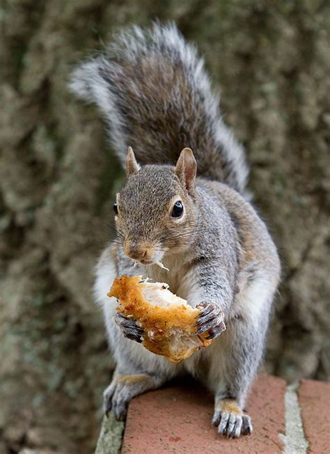 1000 images about squirrel sightings on pinterest
