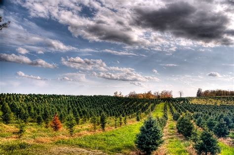 local christmas tree kent oh 7 best local restaraunts images on denison granville ohio and a more