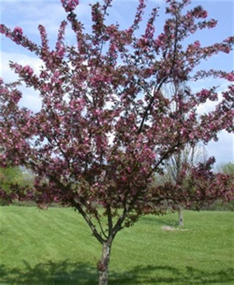 fruit trees for sale wisconsin 17 best images about tree ideas on trees