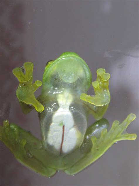 ley no 7554ley organica del ambiente inbio glass frog project noah