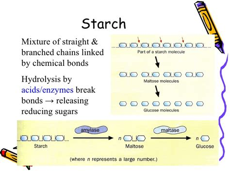 chapter 4 carbohydrates test chapter 4 nutrients lesson 1 carbohydrates