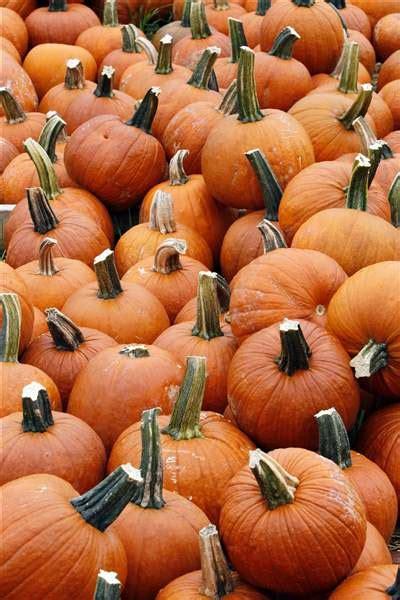 Crop Lets Keep bumper crop lets pumpkin sellers keep 2011 s prices