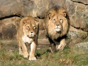 zoo garten zoologischer garten berlin einfach tierisch gut