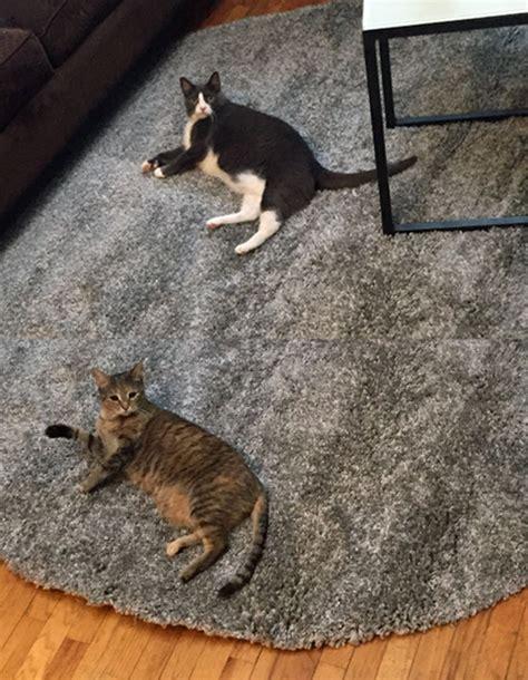 cat area rug cat resistant carpet carpet vidalondon