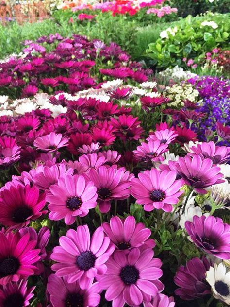 mercato dei fiori torino stagioni mercato dei fiori torino