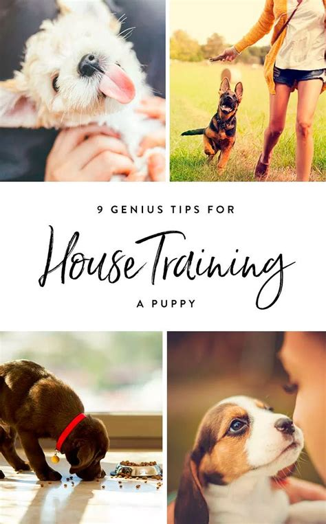 tips on house training a dog best 25 obedience training for dogs ideas on pinterest dog obedience training