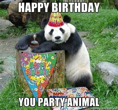 Birthday Animal Meme - you party animal funny happy birthday meme