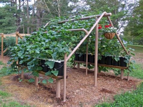 How To Build Grape Trellis building a grape harbor in your garden home decoration ideas